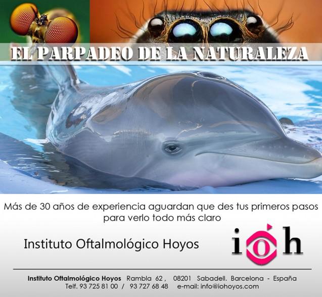 El Parpadeo de la Naturaleza. El sueño de los delfines