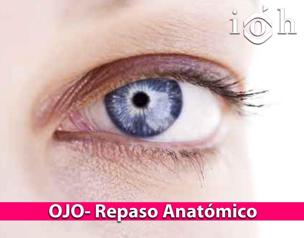 OJO - Repaso anatómico - iohoyos